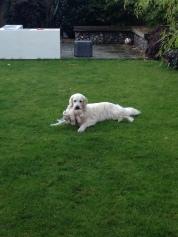 Marley relaxing