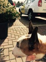 Visiting Bents' Pet Cafe