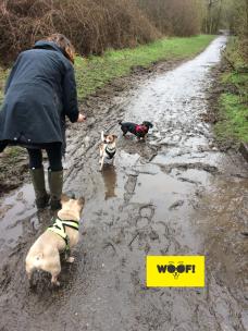 Muddy WOOF! Walks