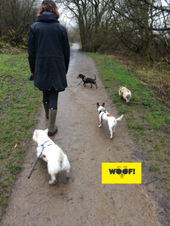 WOOF! Walks