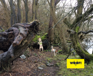 WOOF! Woodland Walk
