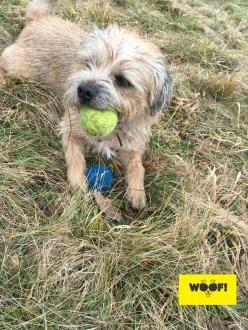Angus' balls!