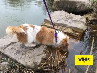 Poppy loves the water